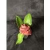 1 bloem in een terracotta potje